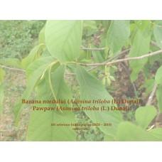 101 referinte bibliografice despre banana nordului [Asimina triloba (L) Dunal] din ultimii 10 ani