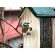 Cuiburi și hrănitori pentru păsări